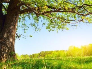Җәйдә туганнарны котлау / Поздравления родившимся летом