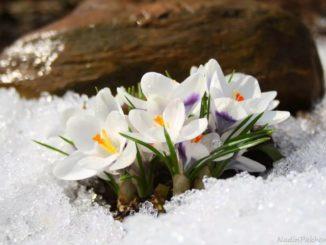 Яз турында шигырлэр / Стихи про весну